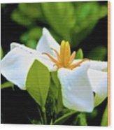 01142017084 Wood Print