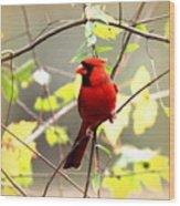 0138 - Cardinal Wood Print