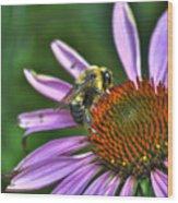02 Bee And Echinacea Wood Print