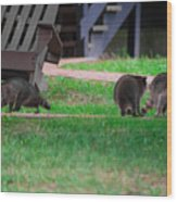 #02 Raccoon Race Wood Print