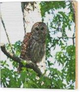 0298-001 - Barred Owl Wood Print