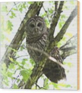 0304-002 - Barred Owl Wood Print