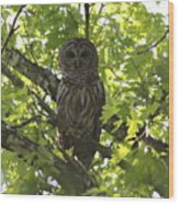 0313-010 - Barred Owl Wood Print
