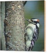 032309-19 Wood Print