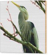 040111-418 Wood Print