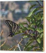 0518- Butterfly Wood Print
