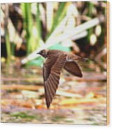 0518 - Northern Rough-winged Swallow Wood Print