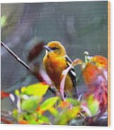 0651 - Baltimore Oriole Wood Print