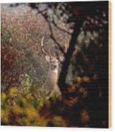 070406-65 Wood Print