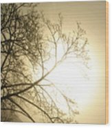 08 Foggy Sunday Sunrise Wood Print