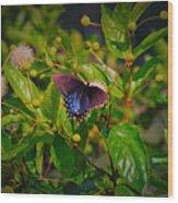 080706-6-a Wood Print
