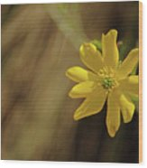 081117007 Wood Print