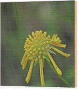 081117008 Wood Print