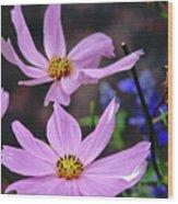 081117017 Wood Print