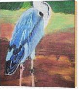08282016 Female Blue Heron Wood Print