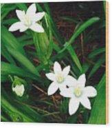 09032015045 Wood Print