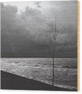 091508-1 Wood Print
