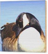 0932 - Canada Goose Wood Print