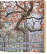 0981 Fall Colors At Starved Rock State Park Wood Print