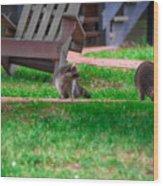 #01 Raccoon Race Wood Print