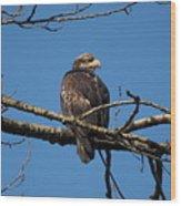 14-03-16 Wood Print