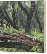 1b6338 Oak Forest On Sonoma Mountain Ca Wood Print