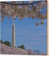 A Capital Cherry Blossom I Wood Print