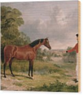 A Horse And A Soldier Wood Print