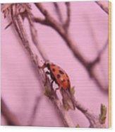 A Ladybug   Wood Print