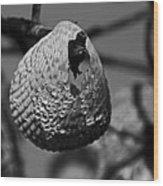 A Shell At The Shore Wood Print