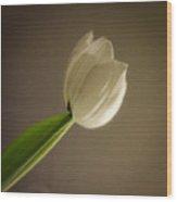 A Tulip Alone Wood Print