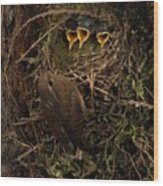 A Visit To The Nest Wood Print