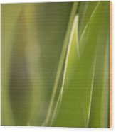 Abstract Iris Leaves And Buds Wood Print