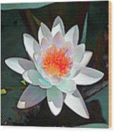Abstract Waterlily Wood Print