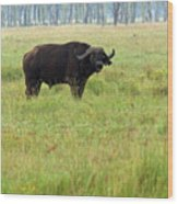 African Buffalo Wood Print