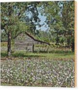 Alabama Cotton Field Wood Print