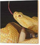 Albino Brazilian Rattlesnake Wood Print