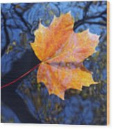 All About Autumn Wood Print