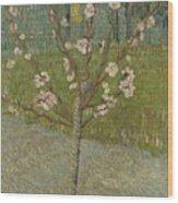 Almond Tree In Blossom Arles, April 1888 Vincent Van Gogh 1853 - 1890 Wood Print
