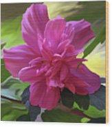 Althea Hibiscus I Wood Print