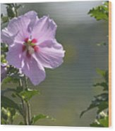 Althea Rose Of Sharon Hibiscus Bloom Wood Print
