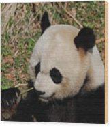 Amazing Panda Bear Holding On To Shoots Of Bamboo Wood Print