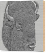 American Bison Wood Print by Larry Linton
