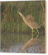American Bittern Close To Shore Wood Print