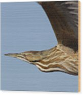 American Bittern Flies By Wood Print