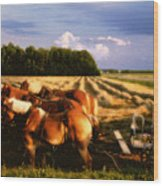 Amish Hay Rig Wood Print