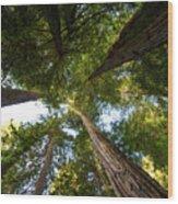 Amoung Giants  Wood Print