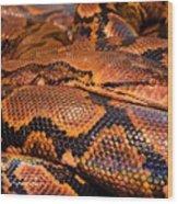 Anaconda Wood Print