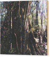 Ancient Pandanii Cradle Mountain Gondwana Rainforest Wood Print