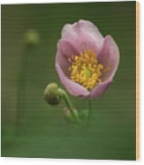 Anemone Japonica  Wood Print